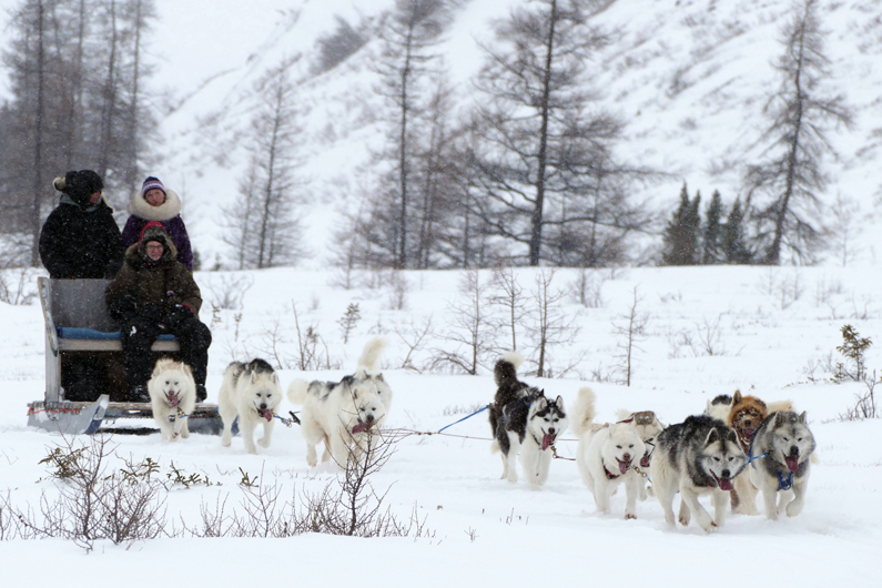 This image has an empty alt attribute; its file name is Dogsledding-March-2019-by-Allen-Gordon.jpg